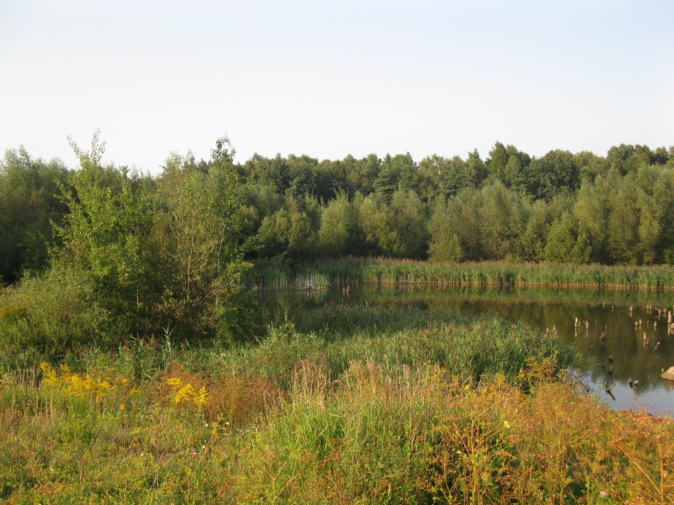 Zagórski Forest in Sosnowiec